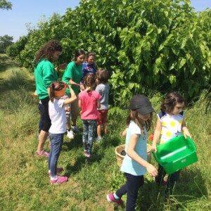 percorso-educazione-ambientale-alla-scoperta-dei-gelsi5ac62c1a94a0e