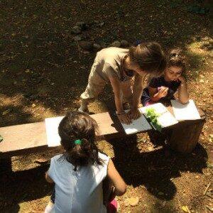 percorso-educazione-ambientale-studio-della-foglia5ac62c5be1ced