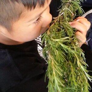 percorso-infanzia-alla-scoperta-delle-piante5ac634adb8c2f